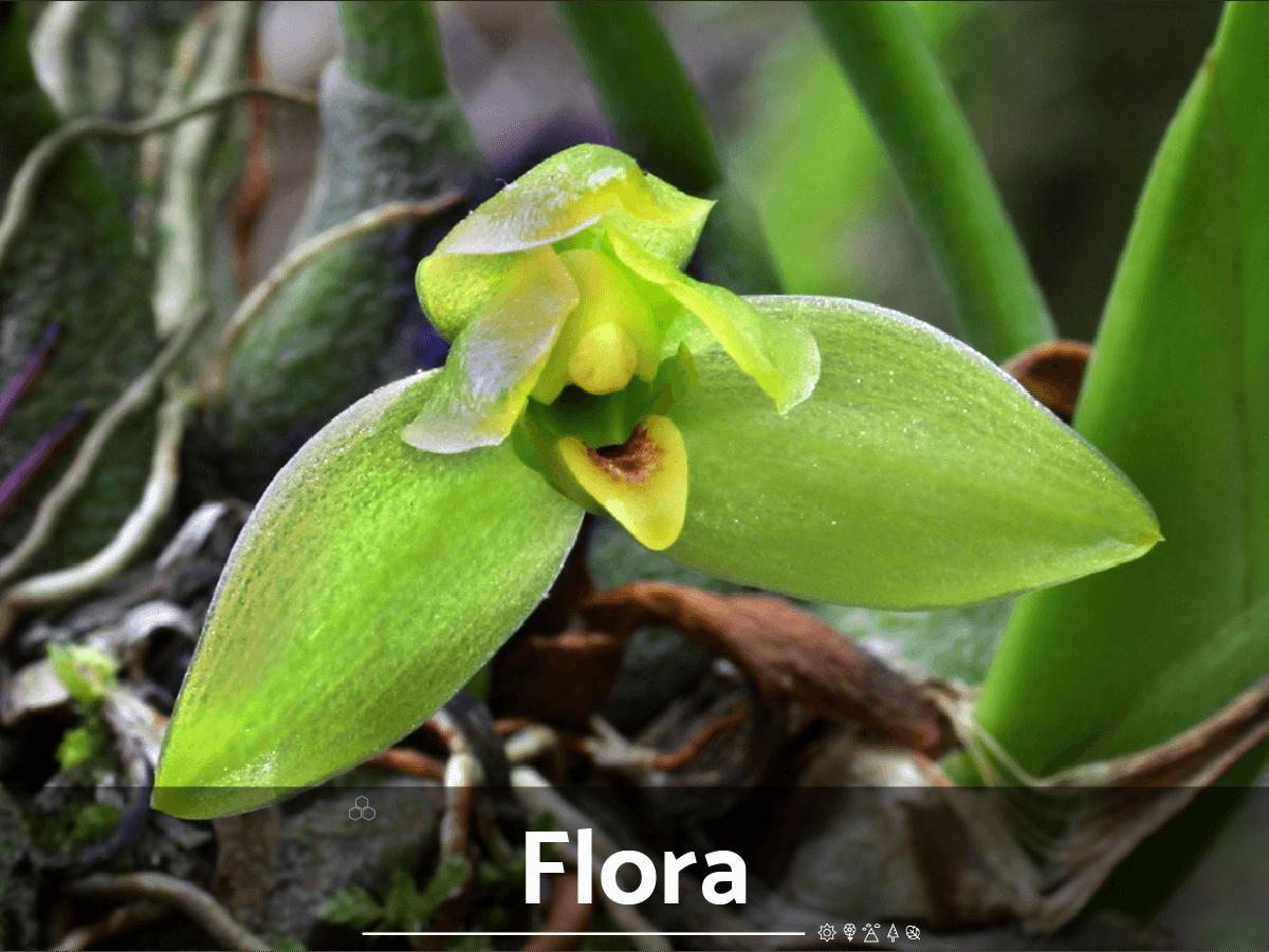 Sliders flora-01