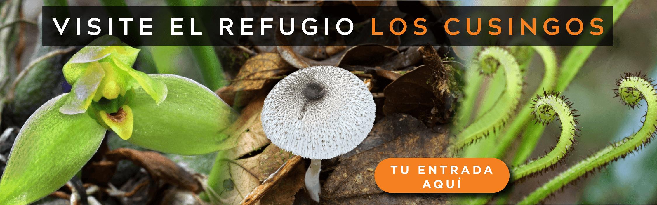 VISITE REFUGIO LOS CUSINGOS-min