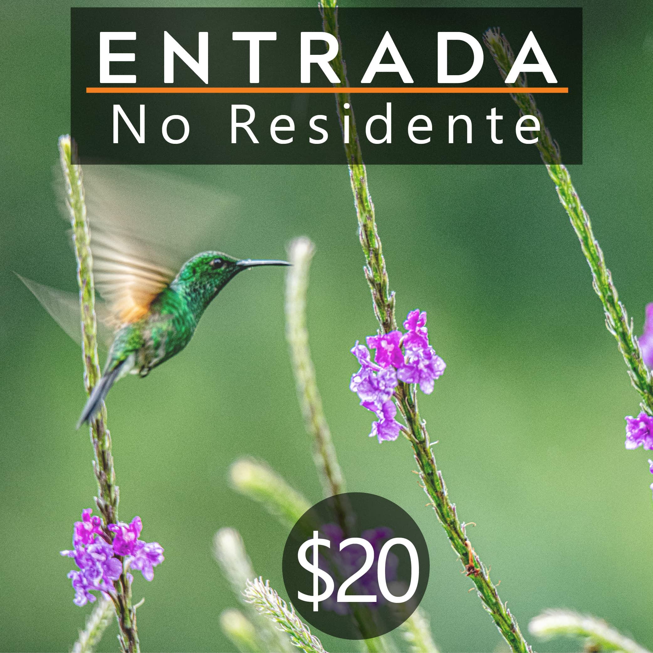 ENTRADA NO RESIDENTE