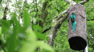 Eyes on the quetzal and climate change